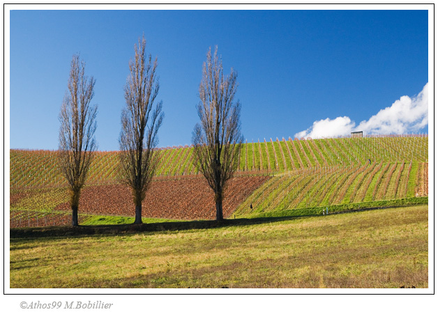 3 abres, campagne genevoise, Canon 30D 1/90 Sec f/8 f=33mm ISO=200