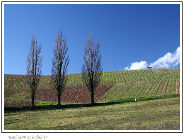 3 arbres, campagne genevoise, Canon 30D 1/90 Sec f/8 f=33mm ISO=200