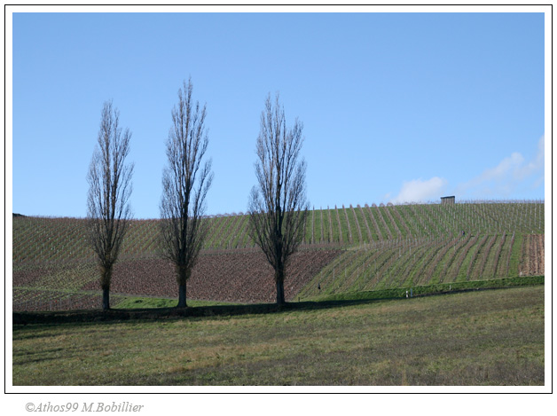 3 arbres, campagne genevoise, Canon 30D 1/250 Sec f/8 f=33mm ISO=200