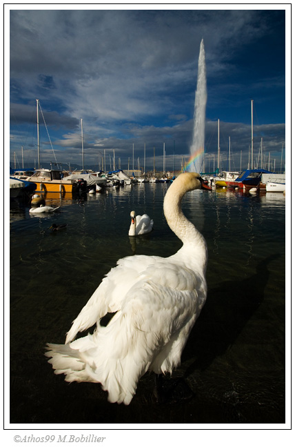 Cygne et Jet d'eau, Genve, Canon 30D 1/500 Sec f/8 f=10mm ISO=200